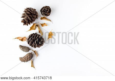 Autumn Composition. Dried, Autumn Eaves And Cones On A White Background. Flat Lay, Top View, Copy Sp