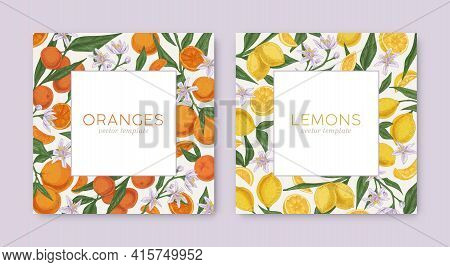 Templates With Hand-drawn Tropical Citrus Frames And White Backgrounds. Square Card Design With Lemo