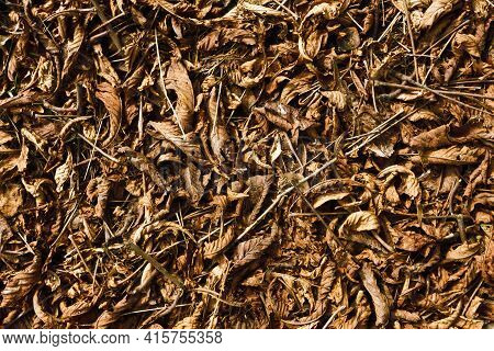 Leaves Texture. Leaf Background. Autumn Forest Ground Background. Golden Yellow Leaves On The Ground