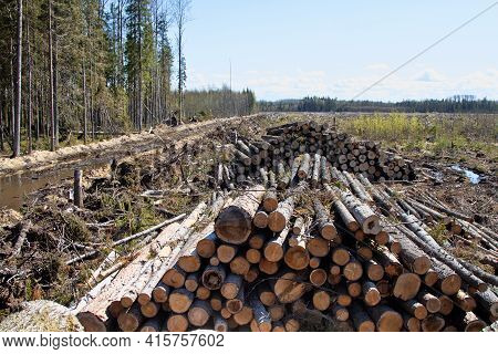 Continuous Cutting Of The Forest Area. A Roundwood Stack (sprus) Within A Felling That Is Surrounded