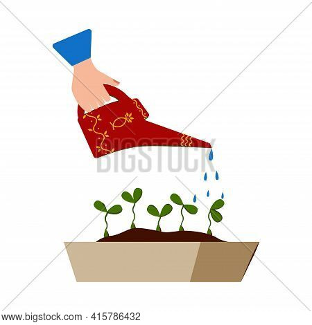 Watering Seedlings With A Garden Watering Can. Young Garden Shoots. Drops Of Water Falling. Water Is