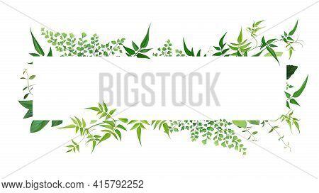 Fresh Natural Greenery Leaves, Branches, Jasmine Vine, Forest Fern, Herbs Botanical Border, Frame, T