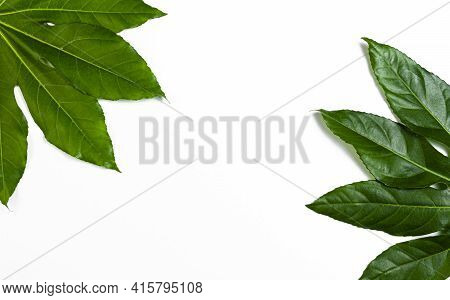Background, Beautiful, Beauty, Botanical, Botany, Branch, Bright, Card, Close-up, Closeup, Color, Co