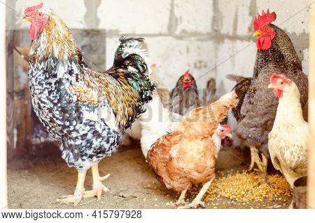 Chicken Coop At Farm In The Village
