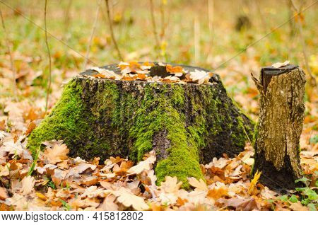 A Beautiful Mossy Stump In Autumn Forest