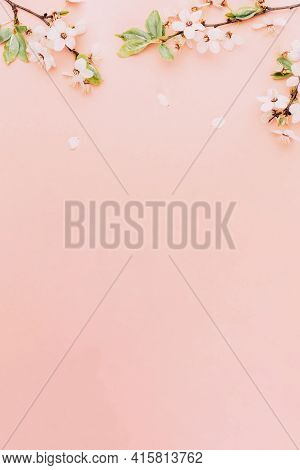 April Floral Nature. Spring Blossom And May Flowers On Pink. For Banner, Branches Of Blossoming Cher
