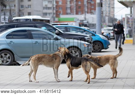 Angry Hungry Stray Dogs Frolicking In The City Center On The Sidewalk Close-up