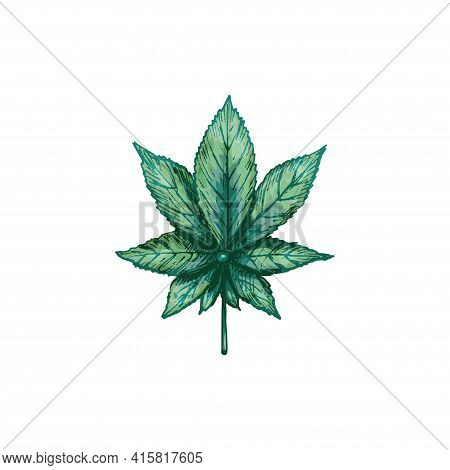 Marijuana Indica Leaf. Vector Color Vintage Hatching Illustration Isolated On A White Background. Fo