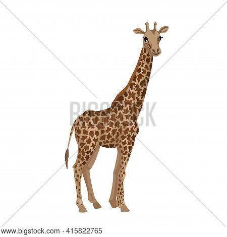 Giraffe, Cub Animal. Little Giraffe With A Long Neck, Tall African Beast, Vector Character On A Whit