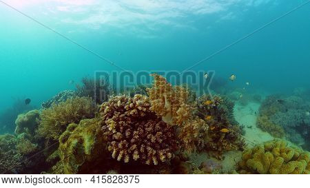 Tropical Seascape Underwater Life. Tropical Underwater Sea Fish. Philippines.