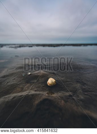 Single Shell In Seashore Tideland, Ebb, Close To Cuxhaven, Germany