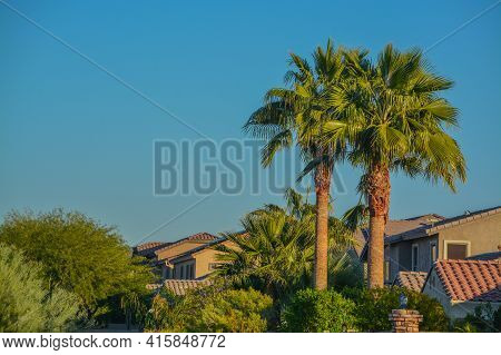 Beautiful View Of The Palm Trees And Plants In The Southwest Desert In Peoria, Maricopa County, Ariz