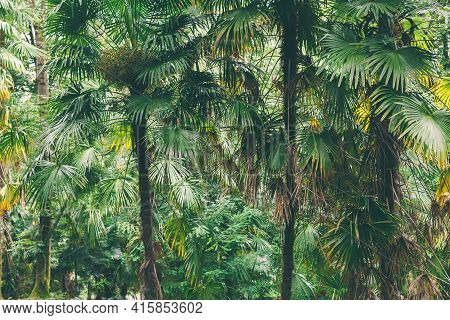 Closeup Nature View Of Green Leaf Background Flat Lay Dark Nature Concept Tropical Foliage. Dark Gre