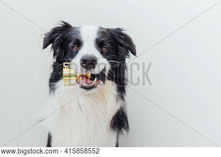 Cute Puppy Dog Border Collie Holding Miniature Champion Trophy Cup In Mouth Isolated On White Backgr