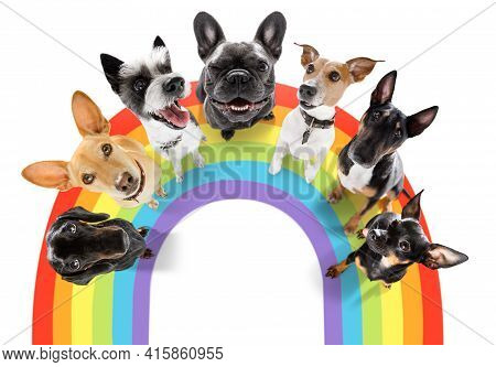 Fairy  Funny Gay Row Couple Of Dogs Proud Of Human Rights ,  With Lgbt Rainbow Flag , Isolated On Wh