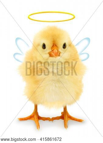 Cute cool chick angel with aureole halo and wings, funny conceptual image