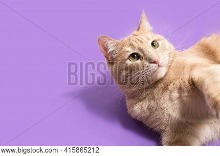 Cat Pet Banner Purple Background Overhead Copy Space