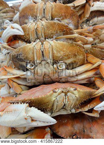 Close Up Of San Francisco Dungeness Crabs On Display At Fishermans Wharf.