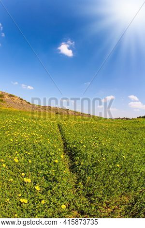 Fields of spring flowers in the bright southern sun. Blue sky and light spring clouds. Magnificent spring. Blooming Negev Desert in early spring. Israel in bloom.
