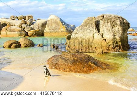 Boulder Beach Landscape. A Penguin Walks Among The Granite Stone Of Boulder Beach Nature And Reserve