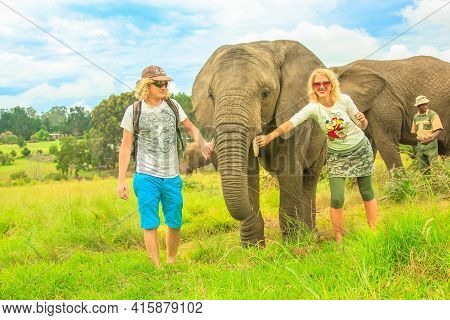 Cape Town, South Africa - January 5, 2014: Happy Tourists Touching An African Elephant In Plettenber