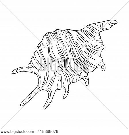 Conch Seashell Outlined Illustration. Tropical Reef Shell Isolated In White Background. Engraved Vec