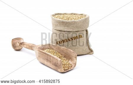 Coriander In A Sack Of Isolated On A White Background. Coriander In A Burlap Sack. Healthy Food. Cor