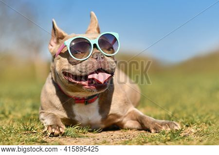 Funny Cool French Bulldog Dog Wearing Blue Sunglasses In Summer On Hot Day