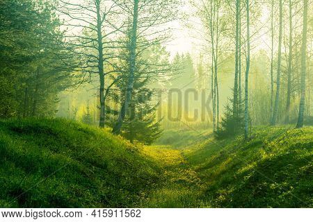 A Beautiful, Green Scenery Of A Roadside Ditch With Birch And Spruce Trees Groving. Fresh Spring Lea