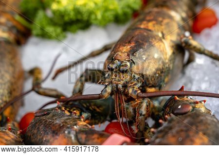 Sea Fresh Lobster At Street Market In Thailand. Seafood Concept. Raw Lobster For Cooking, Close Up