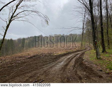 Landscape showing broadleaf forest management in Virton, Luxembourg, Belgium.