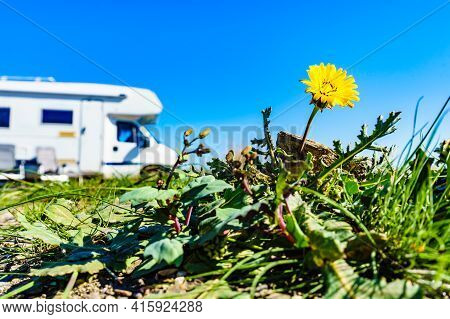 Yellow Spring Dandelion Flower And Camper Vehicle Camping On Sea Shore In The Distance. Caravan Vaca