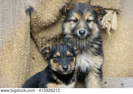 Photo Of Two Stray Dogs On Street. Homeless Hungry Dog. Two Little Black Puppies. Home Animal. Anima