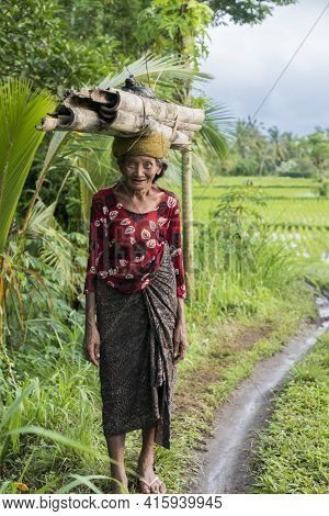 Ubud, Indonesia - February 28: Portrait Of Old Indonesian Woman Farmer Carrying Pieces Of Bamboo On