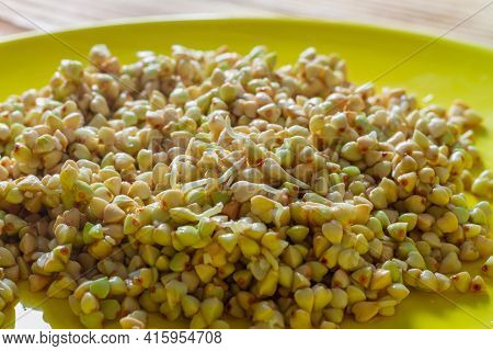 Sprouts Of Green Buckwheat Grains For Obtaining Useful Vitamins. Green Buckwheat With Sprouts For Pr