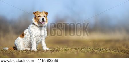 Obedient Happy Dog Puppy Sitting In The Grass. Pet Training Concept, Web Banner.