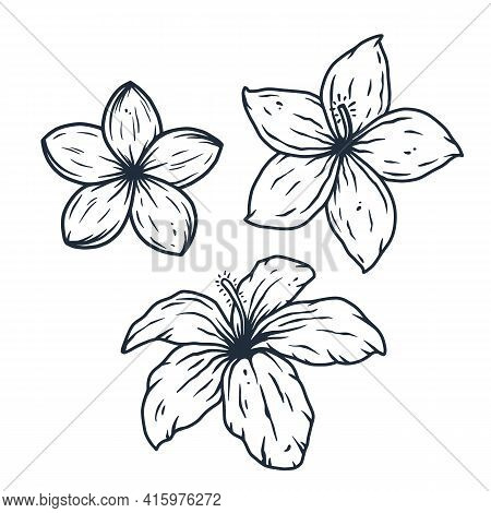 Hawaii Flower. Nature Tropical Floral Bud For Tiki Bar. Exotic Bloom Or Plant For Hawaiian Surf Part
