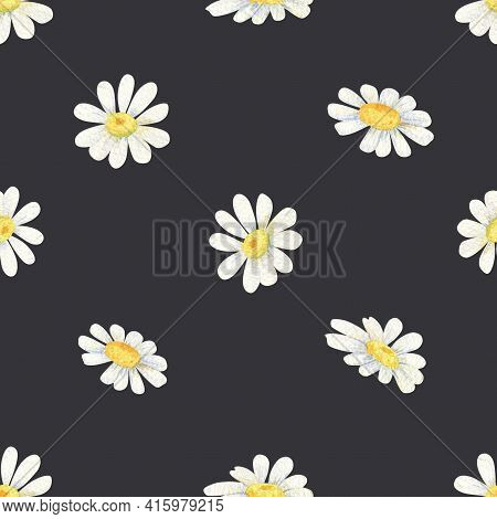 White Daisy Seamless Pattern. Watercolor Wildflowers On Black Background