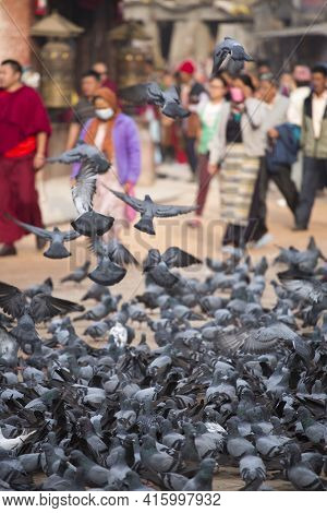 Kathmandu, Nepal, April 21: Group Of Pigeons Early In The Morning At The Boudhanath Stupa In Kathman