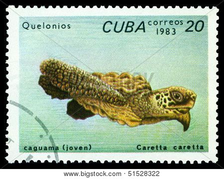Vintage  Postage Stamp. Caretta Caretta.