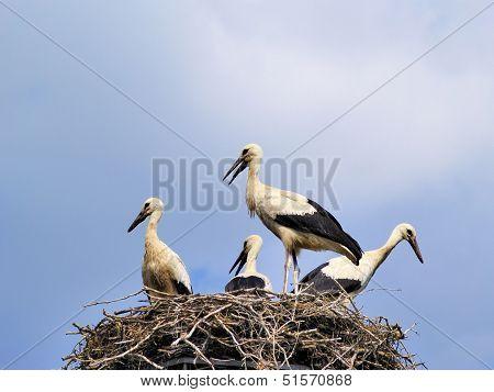 Storks in the nest in Suwalszczyzna Region in Poland poster
