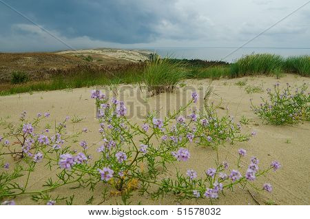 Dead Dunes in Neringa, Lithuania