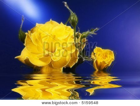 Floating Yellow Rose