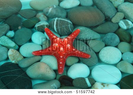 Sea bottom with shells and stones