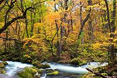 Autumn Colors of Oirase Stream at Aomori,Japan poster