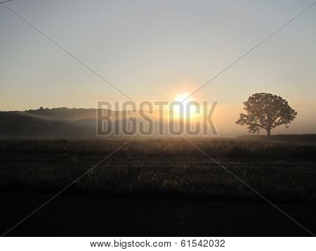 Sunrise mist on a field with a tree