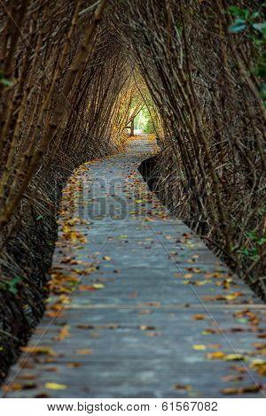 Boardwalk through the mangrove forest