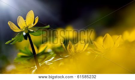 Abstract yellow flowers