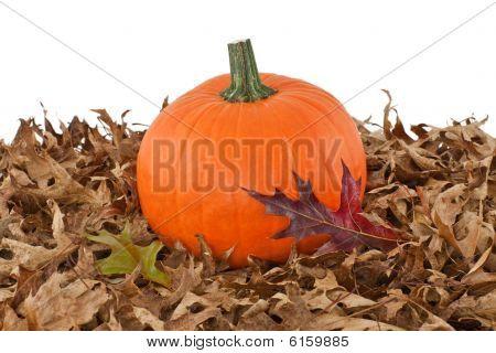 Pumpkin On Fallen Oak Leaves Isolated On White
