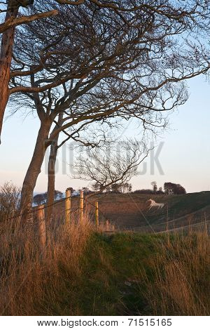 Ancient Chalk White Horse In Landscape At Cherhill Wiltshire England During Autumn Evening